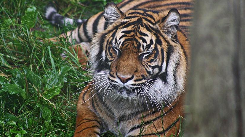 В Оренбургской области тигрица напала на посетителя зоопарка