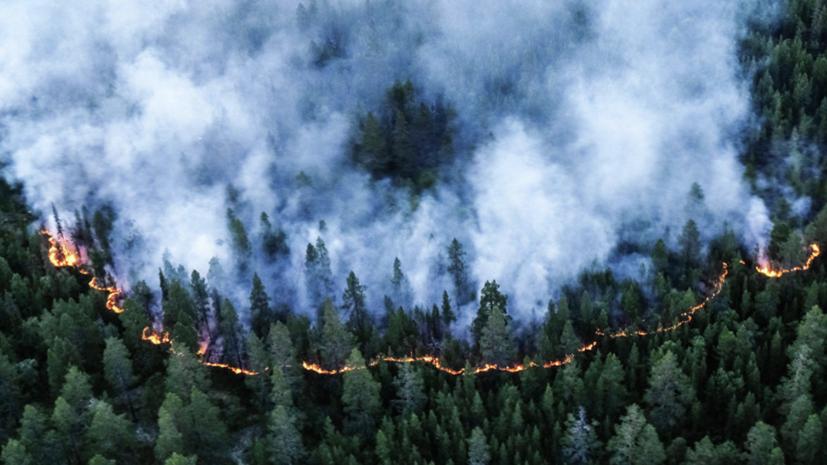 В «Авиалесоохране» назвали общую площадь лесных пожаров в России