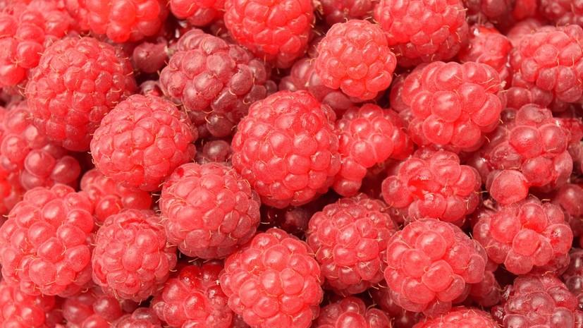 Минсельхоз может взять под контроль сбор грибов и ягод