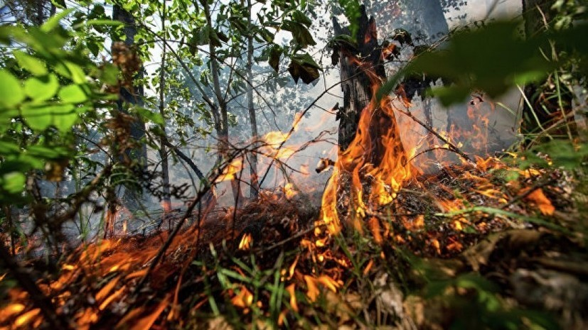 На территории заминированного леса в Донбассе произошёл пожар