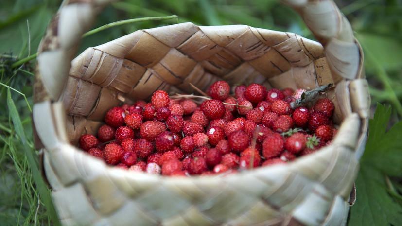 Юридическая заготовка: Минсельхоз не намерен ограничивать сбор грибов и ягод
