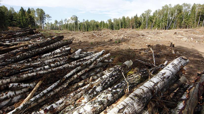 Рослесхоз рассказал об ущербе от вырубки в особо охраняемых зонах в Новгородской области