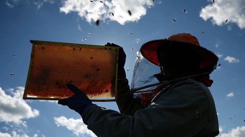 В Госдуме намерены попросить прокуратуру проверить гибель пчёл