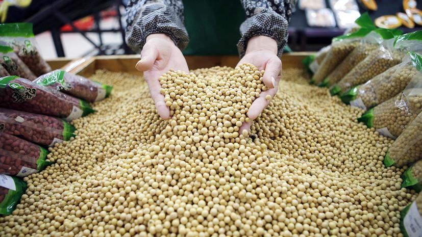 В США прогнозируют исторический максимум экспорта масличных культур из России