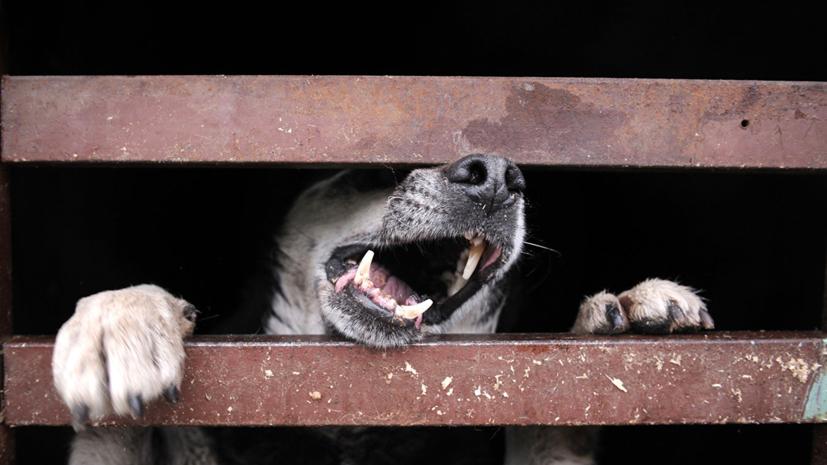 В Петрозаводске проводят проверку по факту нападения собаки на школьницу