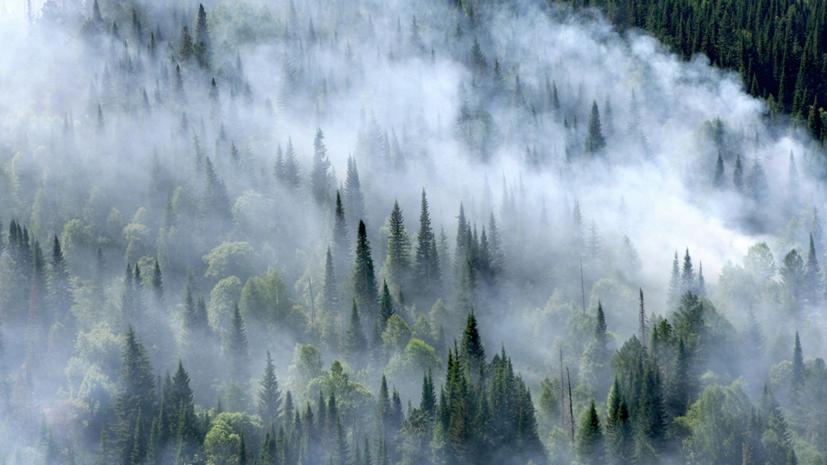 В Красноярском крае пожары охватили почти 700 тысяч гектаров лесов