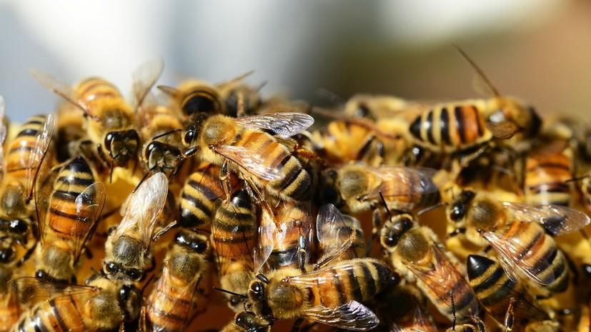 В Орловской области возбудили дело о массовой гибели пчёл