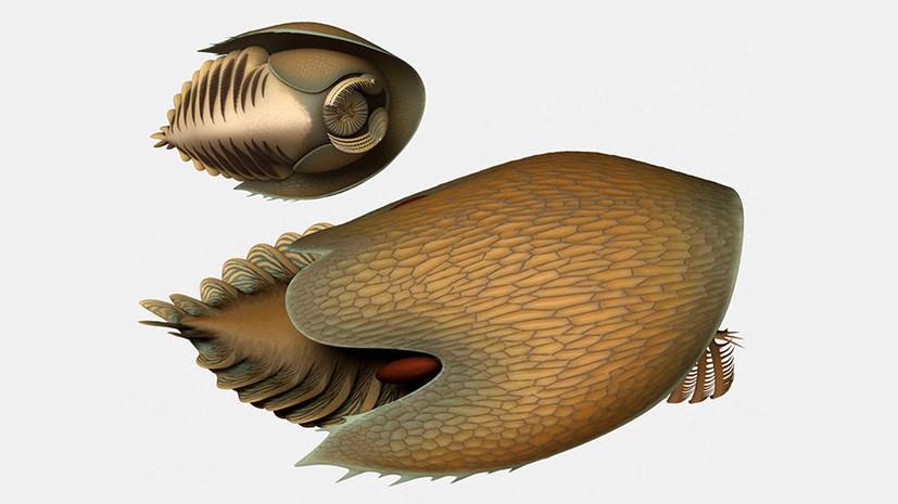Древний хищник: учёные обнаружили окаменелости плотоядного родственника насекомых, крабов и пауков