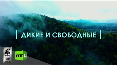 «Дикие и свободные»: RT и WWF представили отрывок из фильма о спасении диких животных