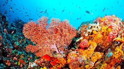 Для коралловых рифов и их обитателей повышение температуры Мирового океана представляет большую опасность