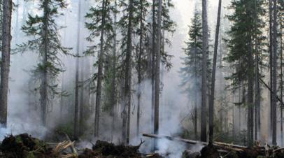Глава Красноярского краяназвал бессмысленным тушение пожаров в Сибири