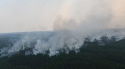Почти 3 млн гектаров: в пяти регионах России ввели режим ЧС из-за лесных пожаров