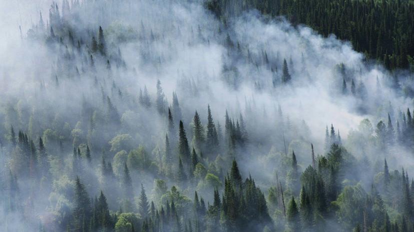 Бастрыкин отправил в Сибирь следователей для выяснения причин пожаров