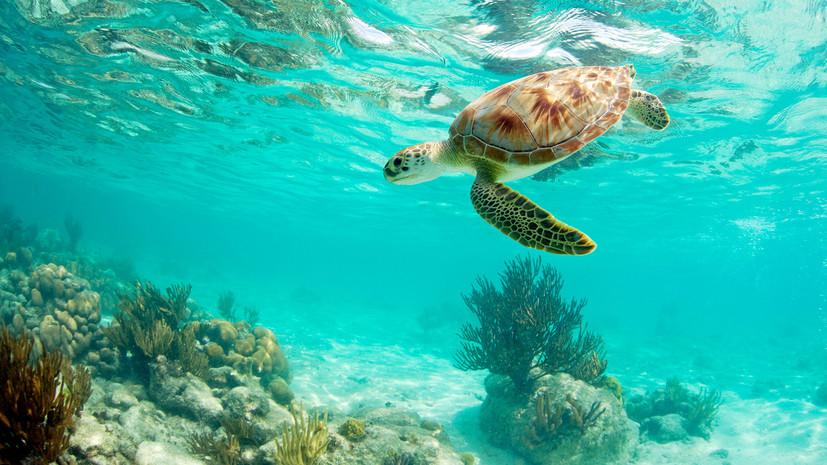 Выбор пола: как черепахи приспосабливаются к изменениям климата