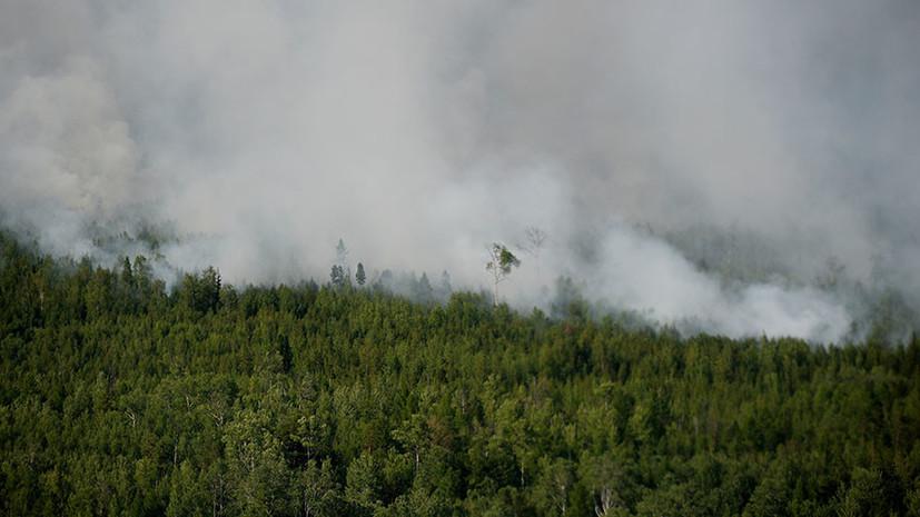 Человеческий фактор: МЧС рассказало об основной причине лесных пожаров в Сибири