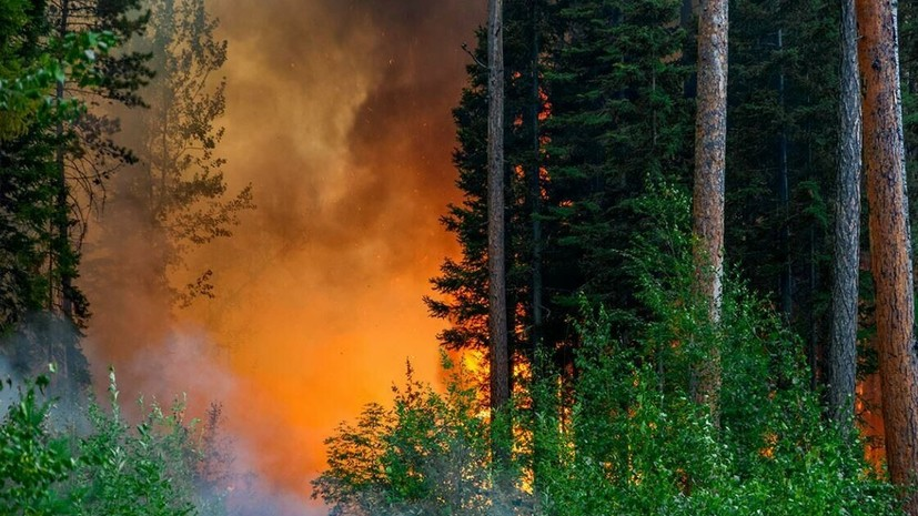 Генпрокуратура назвала причины распространения лесных пожаров в Сибири