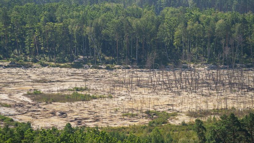 «Киев не контролирует ситуацию»: сможет ли Зеленский остановить нелегальную добычу янтаря на севере Украины