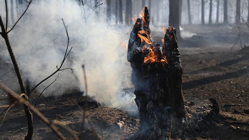 В СПЧ прокомментировали ситуацию с лесными пожарами в России