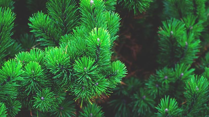В Татарстане планируют вырастить более 30 млн саженцев для восстановления лесов