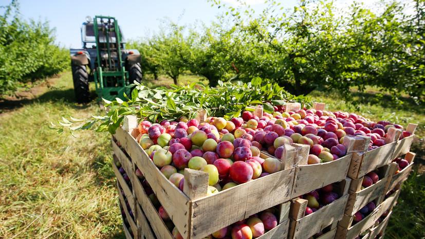 «Сокращение зависимости»: Минсельхоз США отметил рост агросектора России на 30% после введения санкций