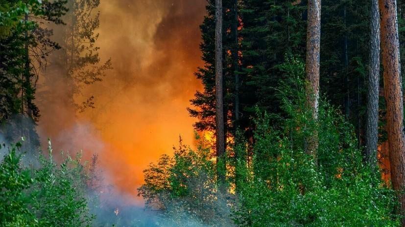 В России потушили более 200 природных пожаров за сутки