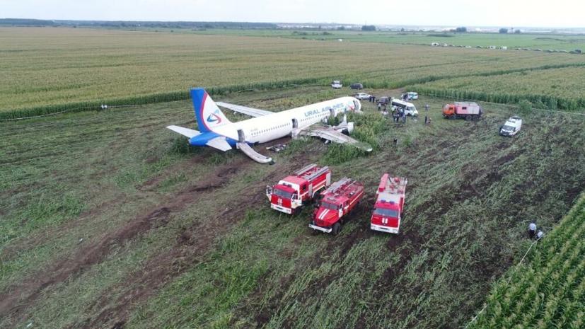В Минтрансе оценили орнитологическую безопасность аэропортов России