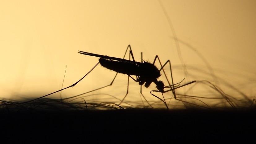Эксперт прокомментировал данные об опасных комарах на юге России
