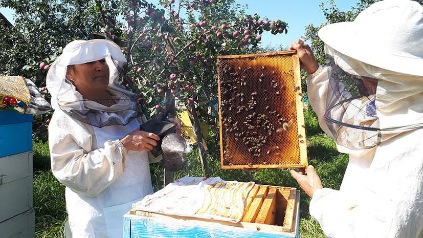 «Все рабочие пчёлы погибли ещё в июне»: из-за производства рапса для Европы в России начались проблемы с мёдом