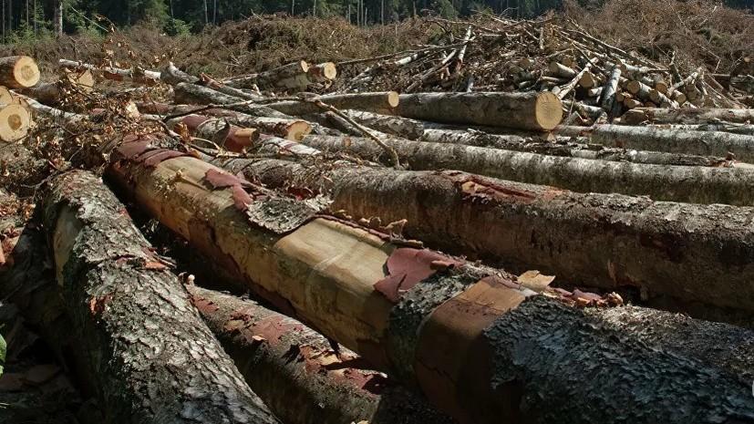 На Украине атаковали снимавших незаконную вырубку леса журналистов