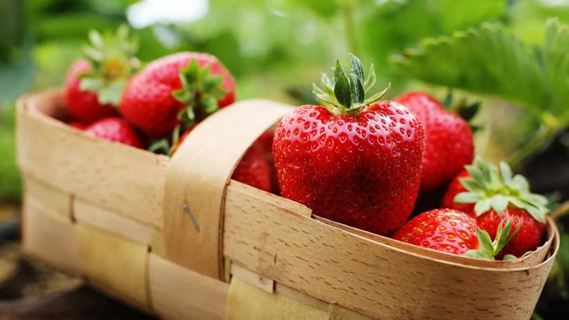 Финляндия ограничит ввоз ягод из России
