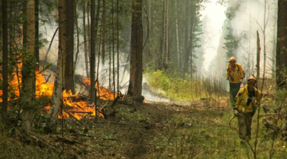 В Якутии потушили 217 лесных пожаров с начала пожароопасного сезона
