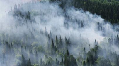 В Рослесхозе оценили ущерб от лесных пожаров