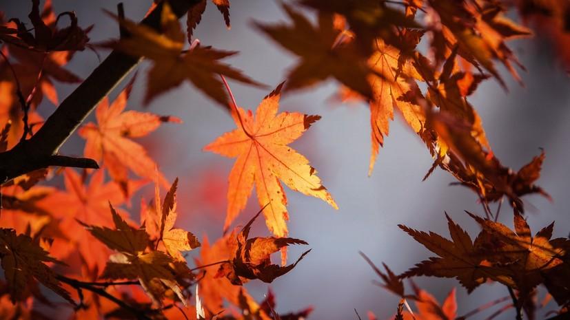 Осенью температура воздуха в мире может превысить норму