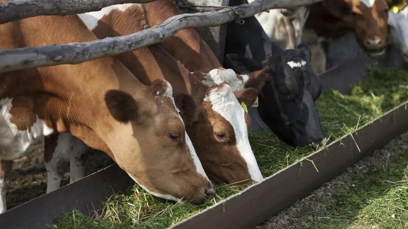 В Тверской области рассказали о планах увеличить производство молока