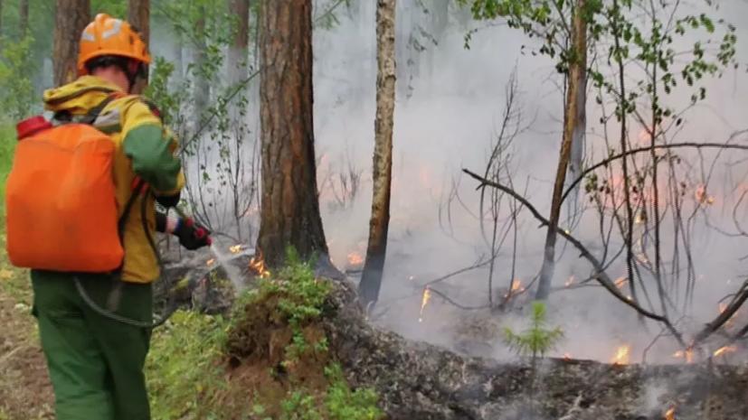 Площадь лесных пожаров в зоне тушения в России уменьшилась до 438 га