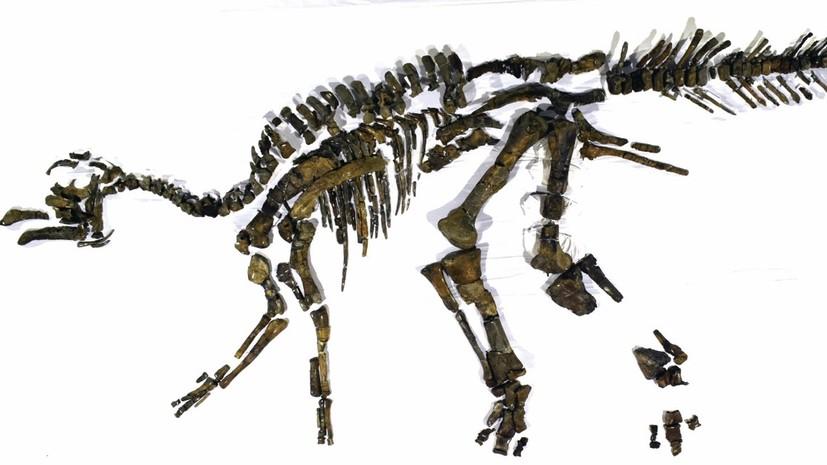В Японии обнаружили крупный скелет динозавра