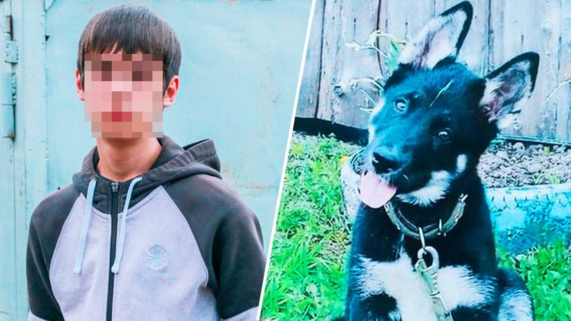«С учётом повышенного резонанса»: дело томского подростка, пытавшегося спасти щенка, вернули прокурору