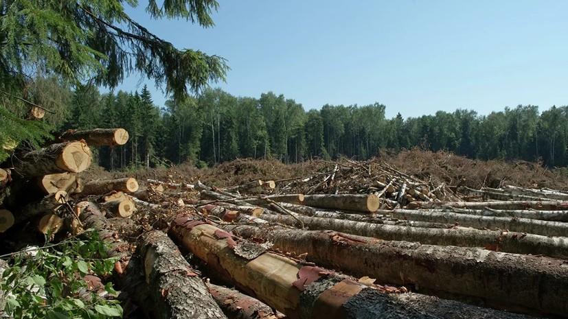 В Татарстане выявили факт незаконной рубки леса