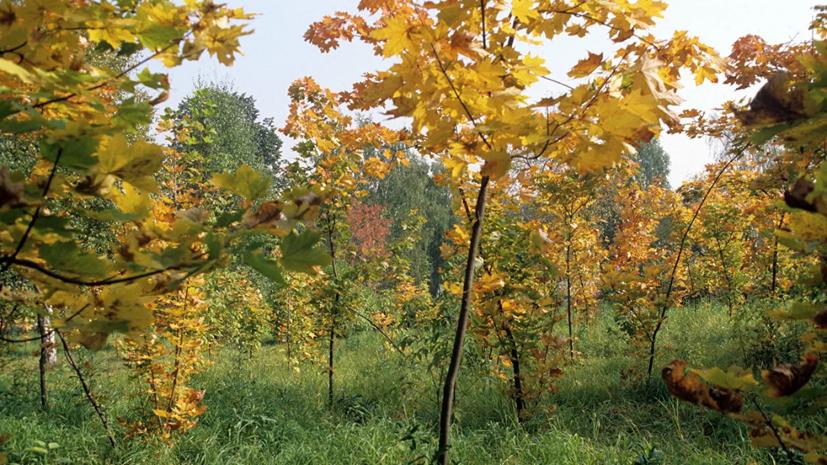В Удмуртии высадили около 15 га леса