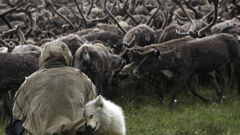 «Они не могут вернуться»: пограничники увезли якутских оленеводов за сотни километров от дома, чтобы проверить паспорта