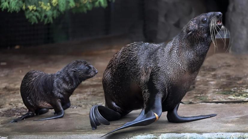 Более 150 детёнышей родились в Московском зоопарке весной и летом