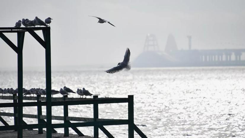 На Украине призвали к переговорам по морской границе с Россией