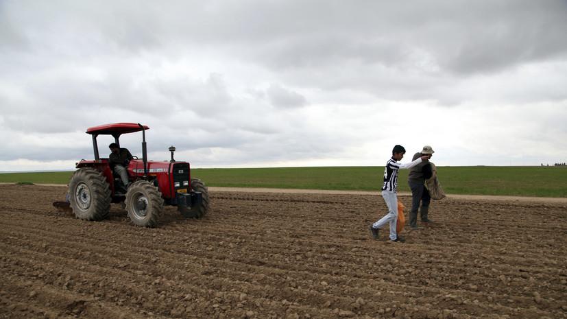 В Ираке призвали Россию сотрудничать в сельском хозяйстве