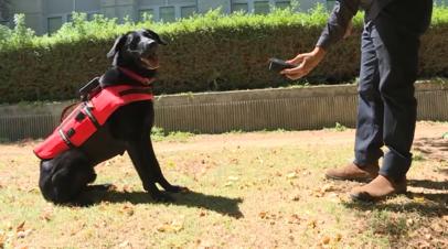 В Израиле создали аппарат дистанционного управления служебными собаками