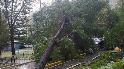 Спасатели рассказали о последствиях шквалистого ветра в Тюменской области