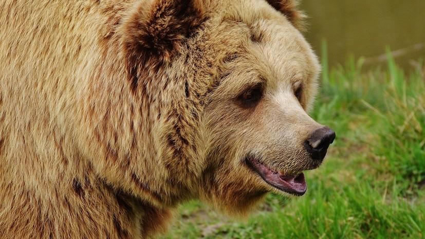 На Камчатке посмертно наградили подростка, спасшего брата от медведя