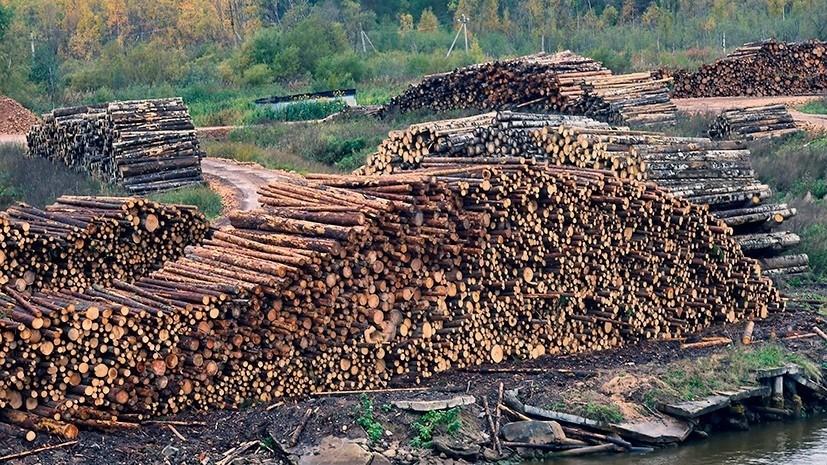 В Россельхознадзоре рассказали о незаконном вывозе хвойной древесины в регионах