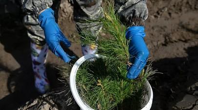В центре Москвы высадят более 460 деревьев и 32 тысячи кустарников
