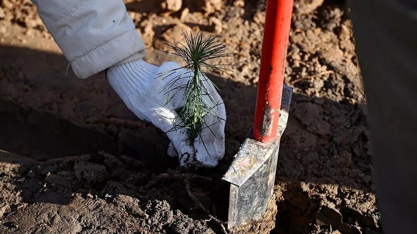 В Рослесхозе подвели итоги кампании «Сохраним лес»