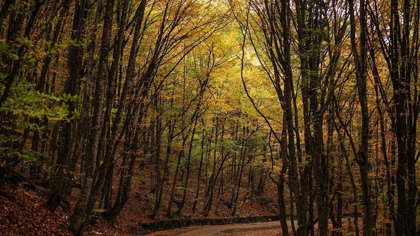 Во Всероссийском обществе охраны природы призвали проводить больше акций по сохранению леса